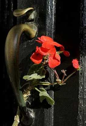 Flowers are seen perched in the door handle of the Church Street Apothecary, which is owned by the Kim family Wednesday (AP)