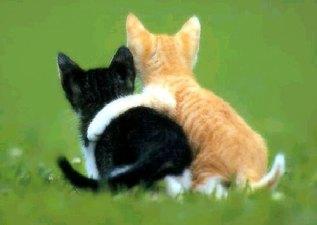 friendscats