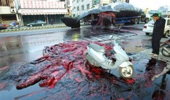 Whale explodes (Reuters)