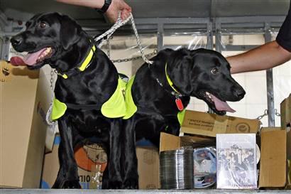DVD dogs (AP)
